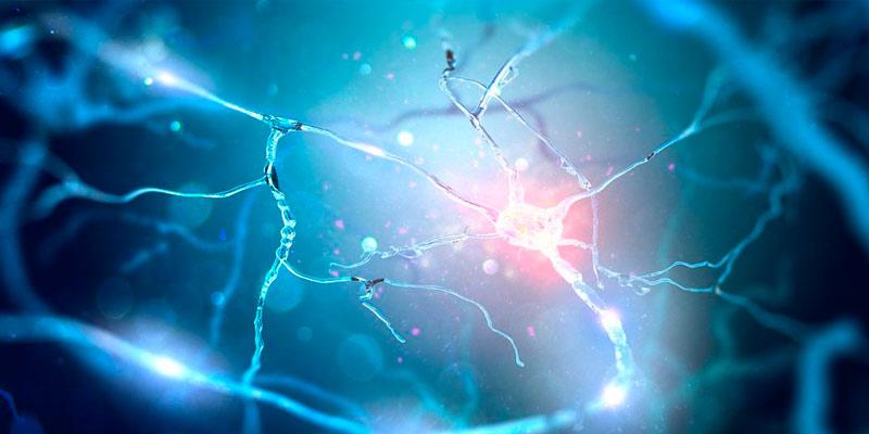 enfermedades que trata el neuropediatra