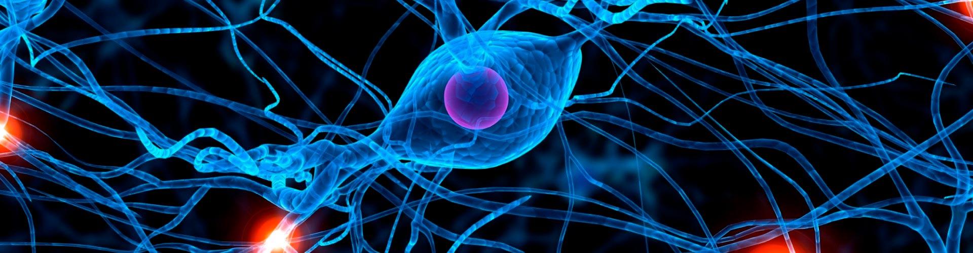 Afectaciones del sistema nervioso, ¿cuándo prestar atención?