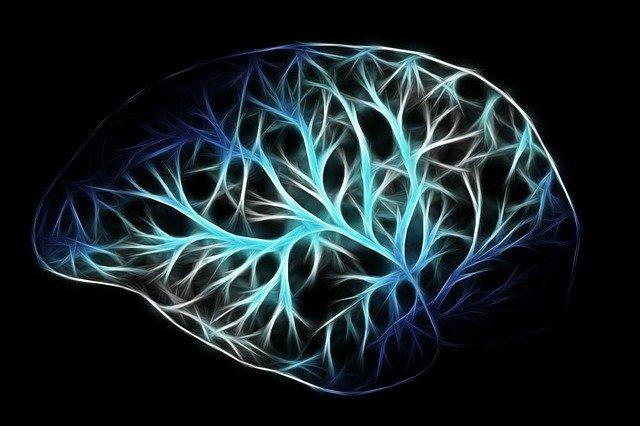 5 Tipos comunes de epilepsia y síndromes epilépticos que debes conocer